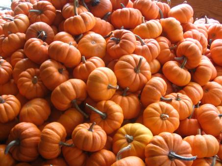 Free Stock Photo of Pumpkin Pile