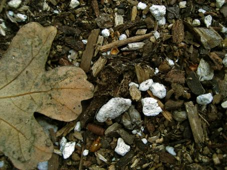 Free Stock Photo of Leaf, Rocks, & Wood Chips