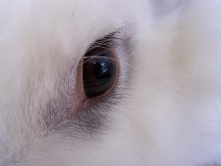 Free Stock Photo of Bunny eye