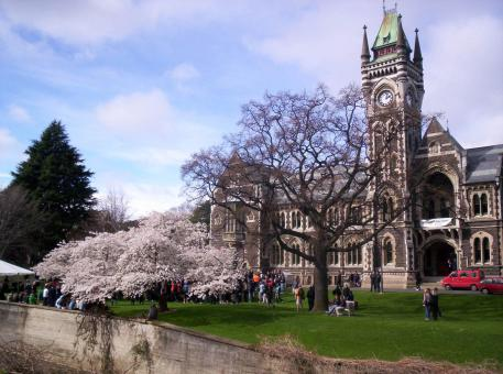 Free Stock Photo of Otago University Students Protest