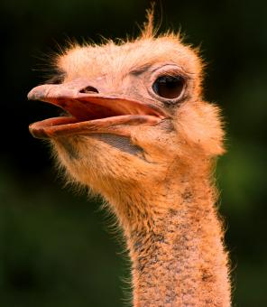 Free Stock Photo of Long Neck