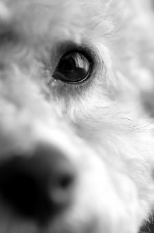 Free Stock Photo of Eye of the Dog