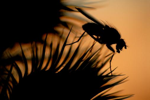 Free Stock Photo of Sunset fly