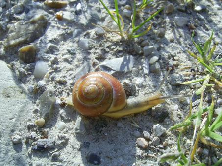 Free Stock Photo of Norwegian snail