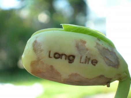 Free Stock Photo of Long Life