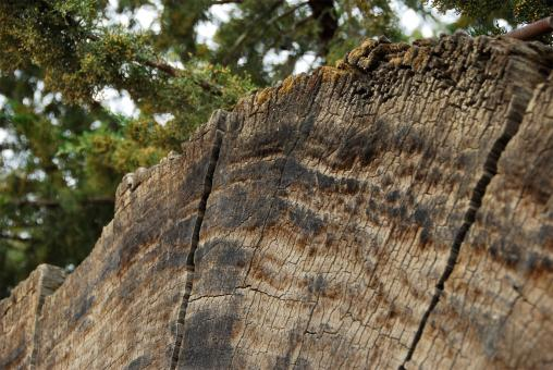 Free Stock Photo of Fallen Tree - Cross Section