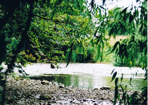Free Stock Photo of River Bank Tales
