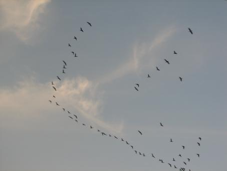 Free Stock Photo of Flock