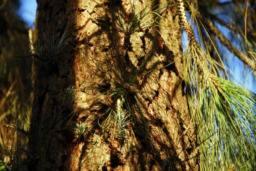 Free Stock Photo of Pine Tree Sprouts