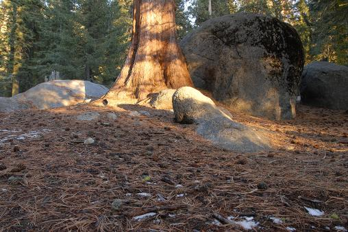 Free Stock Photo of Forest Floor in Sequoia National Park