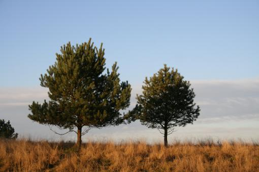 Free Stock Photo of Two trees in the field
