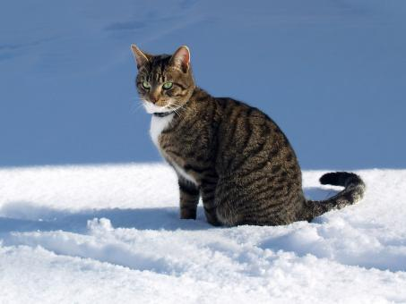 Free Stock Photo of Winter cat