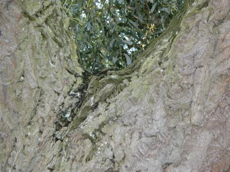 Free Stock Photo of Green and Gray Bark texture