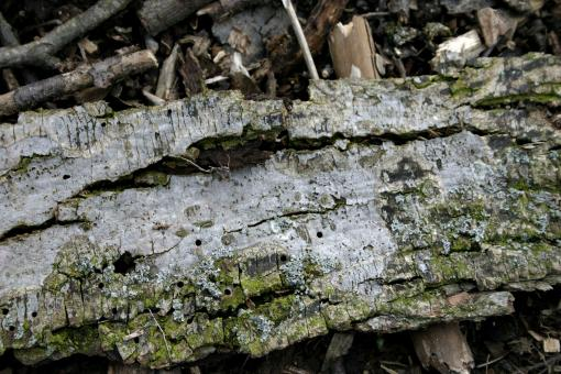 Free Stock Photo of Dead Wood Texture