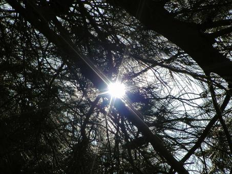 Free Stock Photo of Tree branches in the sun