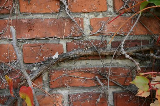 Free Stock Photo of Plant on a brick wall