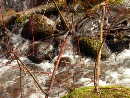 Free Stock Photo of Water Stream, boulders and Branches