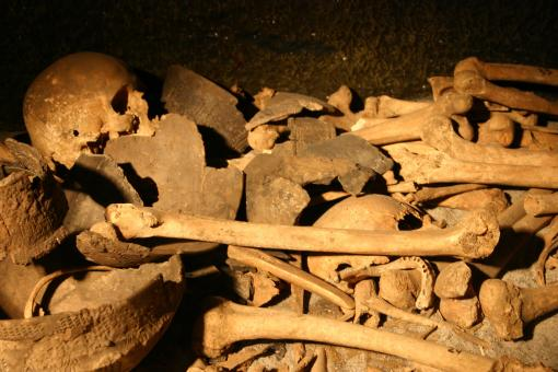 Free Stock Photo of Pile of bones and skulls