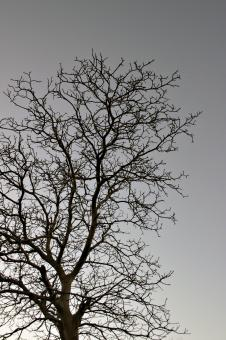 Free Stock Photo of Tree against the sky