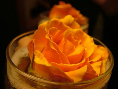 Free Stock Photo of Orange rose in container