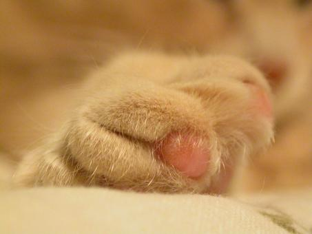 Free Stock Photo of Cat paw