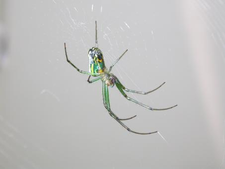 Free Stock Photo of Green spider