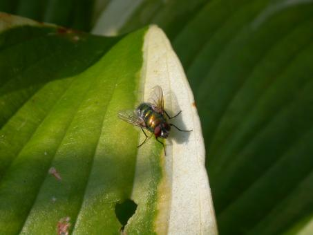 Free Stock Photo of The fly