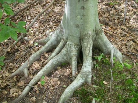 Free Stock Photo of Tree roots