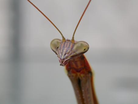 Free Stock Photo of Alien like insect