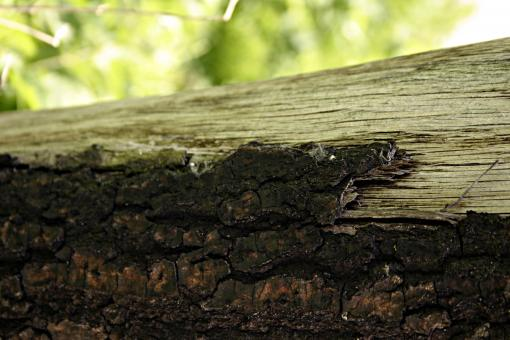 Free Stock Photo of Old wood closeup