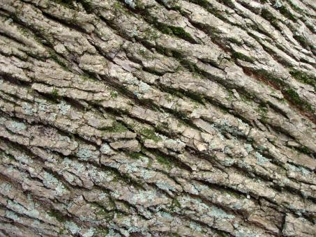 Free Stock Photo of Tree bark