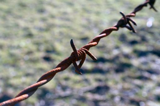 Free Stock Photo of Barbed wire detail