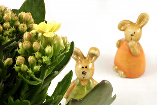 Free Stock Photo of Easter rabbits looking at a flower
