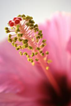 Free Stock Photo of Pink Flower Closeup