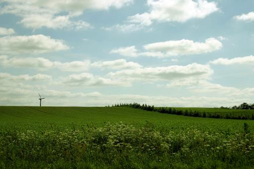 Free Stock Photo of Green field