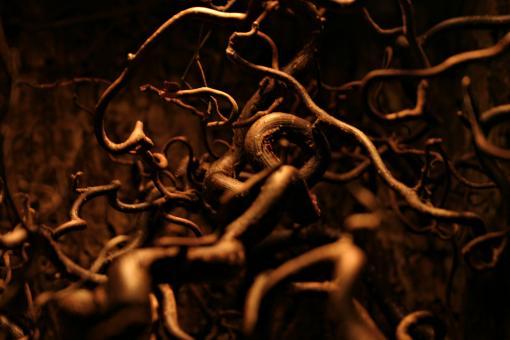 Free Stock Photo of Dark roots
