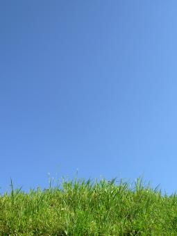 Free Stock Photo of Green grass agains a clear sky