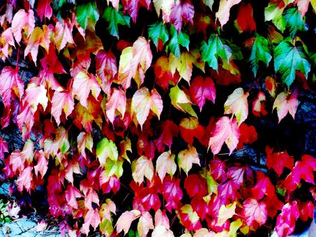 Free Stock Photo of Multy Coloured Foliage