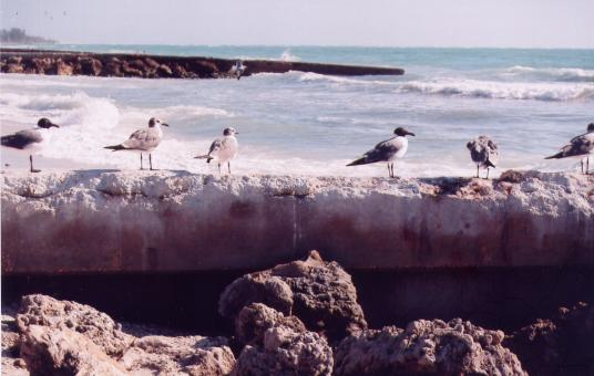 Free Stock Photo of SeaGulls