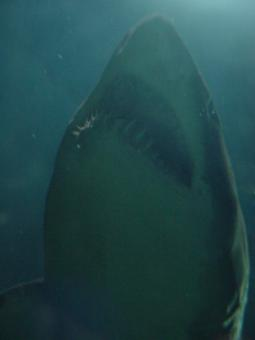 Free Stock Photo of Jaws