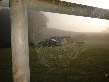 Free Stock Photo of Spiderweb on a cold morning