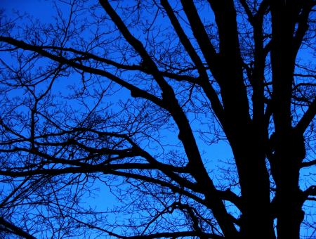Free Stock Photo of bare trees  night