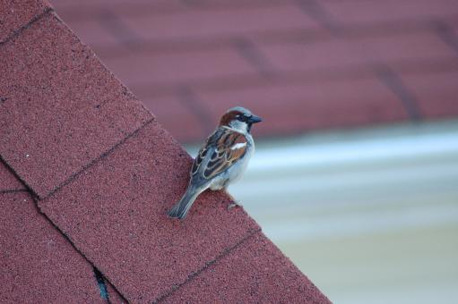 Free Stock Photo of Bird on the Roof
