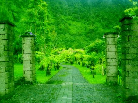 Free Stock Photo of Green path