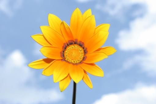 Free Stock Photo of Orange flower in the sky.