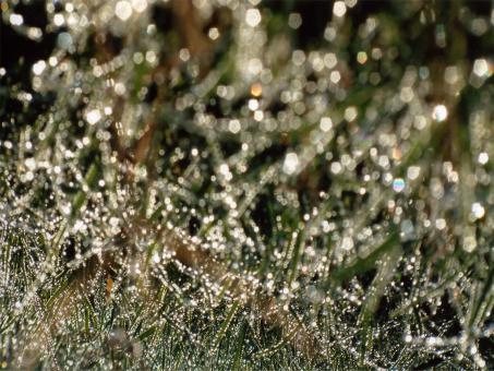 Free Stock Photo of Morning dew
