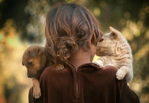 Free Stock Photo of Little girl and puppies