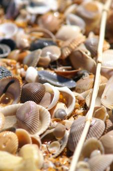 Free Stock Photo of Sea shells