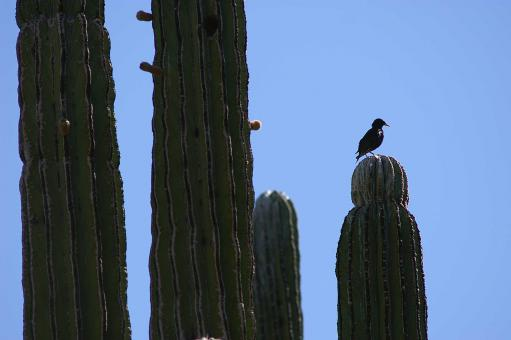 Free Stock Photo of Bird sitting on cactus