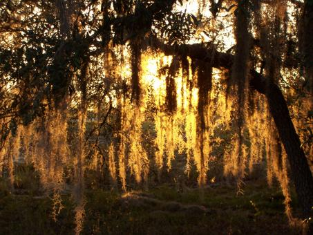 Free Stock Photo of Sunset and spanish moss